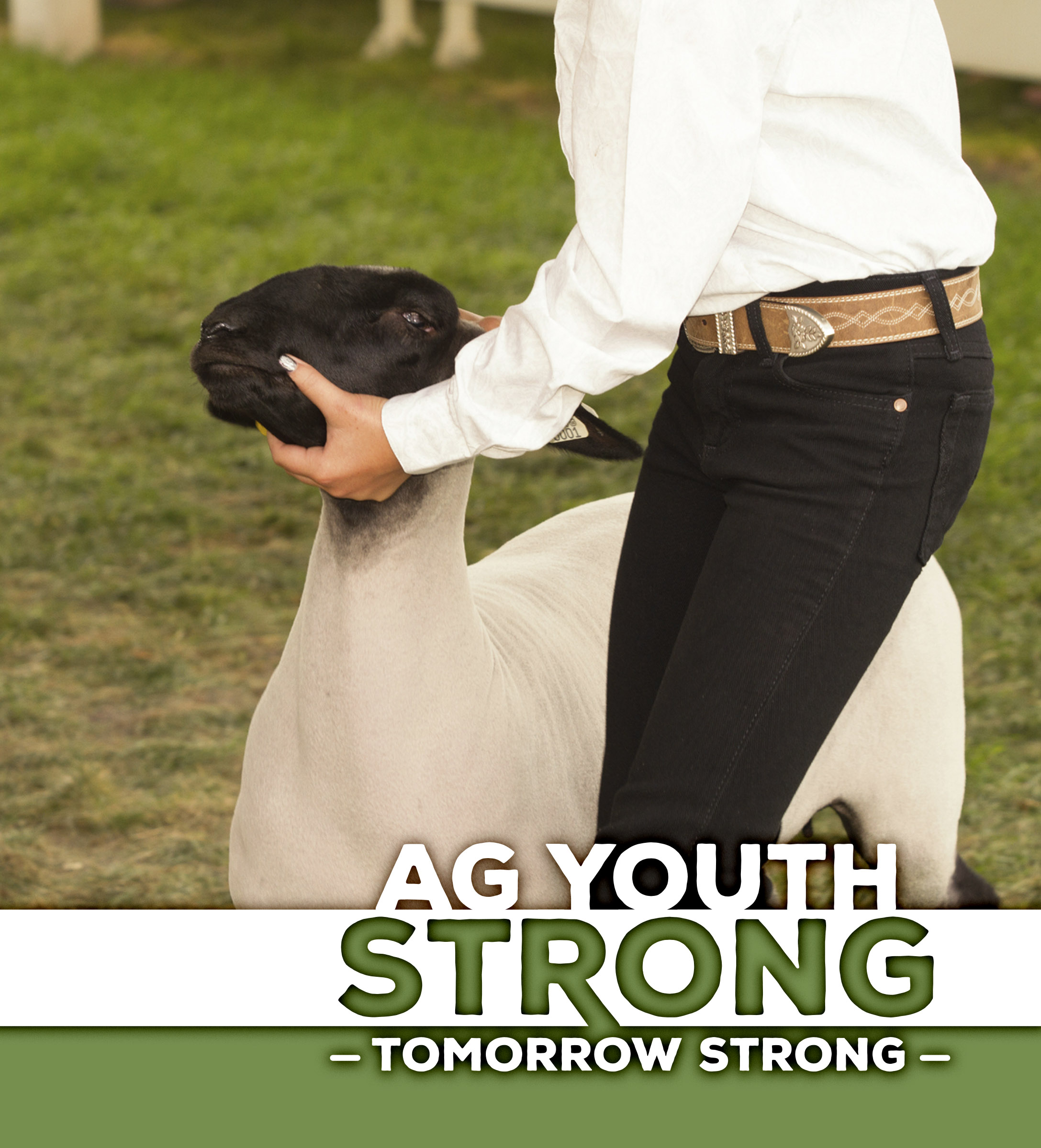"""A stock show student showing a lamb with """"Ag Youth Strong"""" headline"""